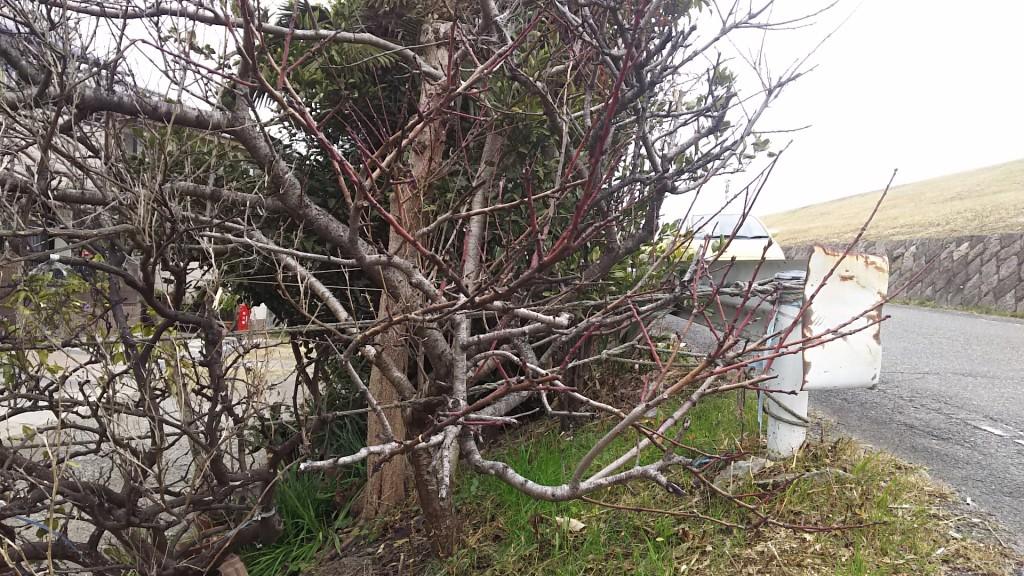 木川東1丁目 河川敷沿い道路の木