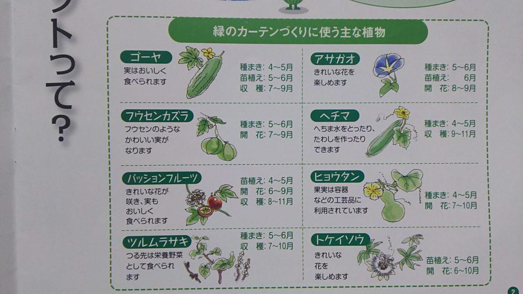 緑のカーテンに使える植物