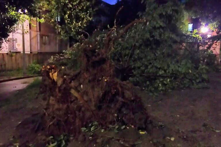 2018年9月4日 19時前後の街の様子 倒れた公園の 大木 根っこから