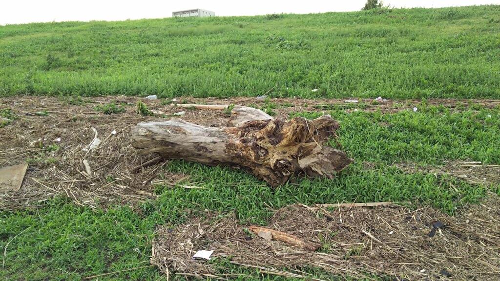 2018年9月5日 淀川河川敷 西中島地区 流れてきた 木