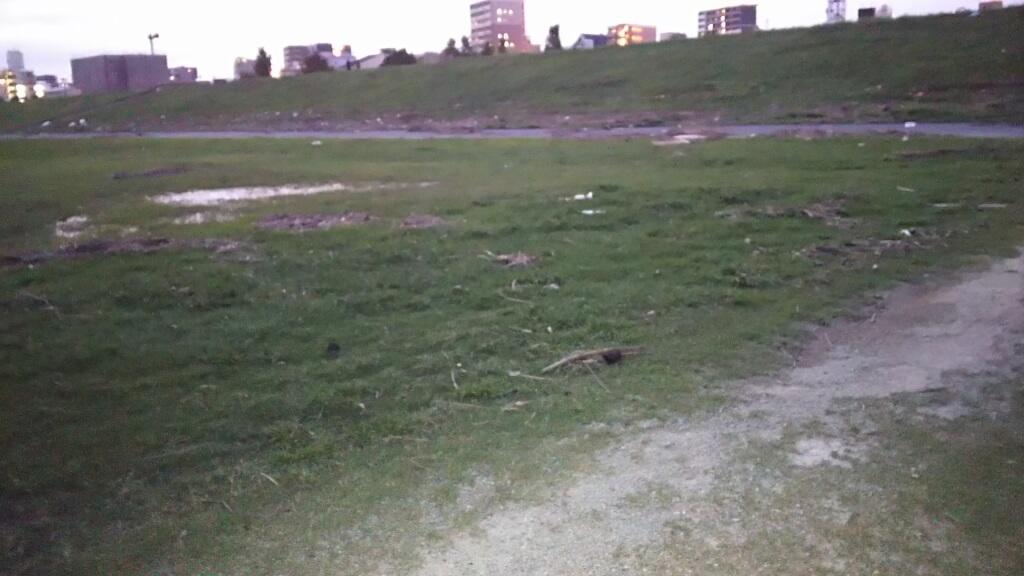 2018年9月5日 淀川河川敷 西中島地区 芝生エリアの 砂地