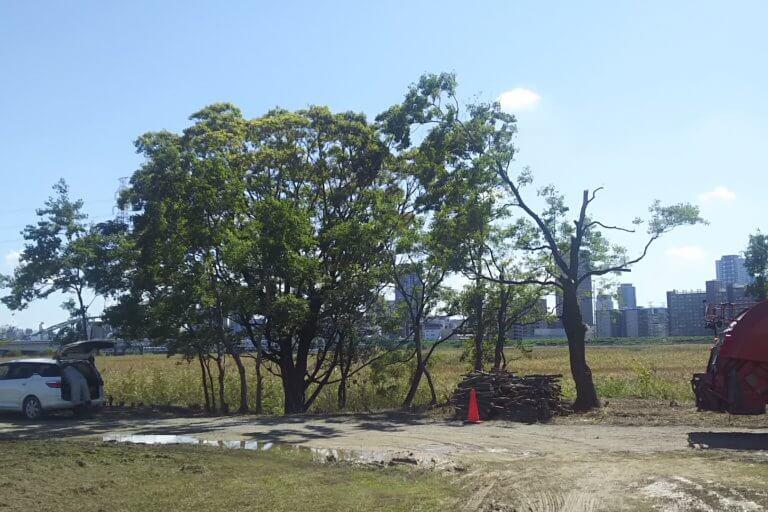 淀川河川敷 西中島地区 除草作業中 の 木を切ったあと