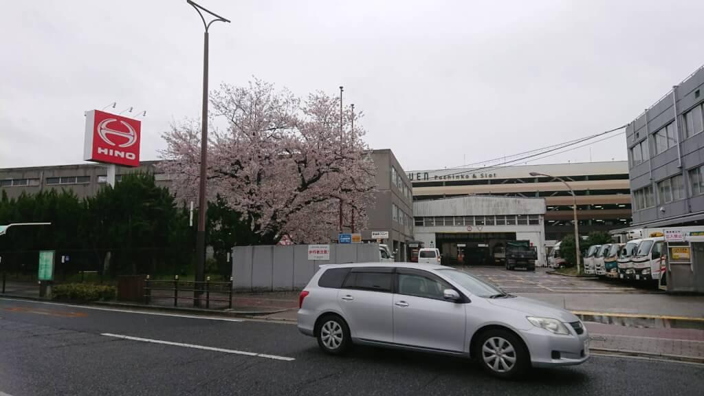 西淀川区千舟 日野自動車付近の 桜