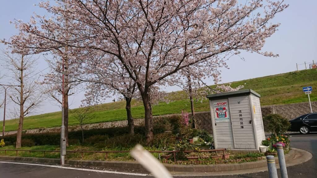 淀川河川敷 堤防沿い 桜 新北野付近