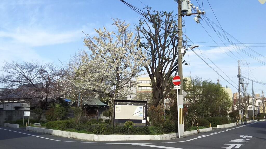 大和田北公園 西側 桜の木