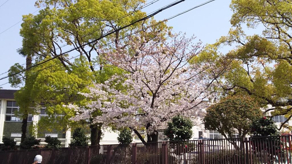 2019年4月7日 木川南小学校 桜