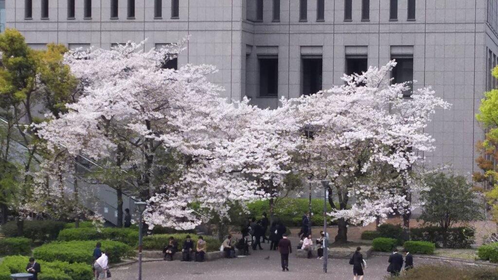 新大阪 北西 大阪市立宮原 地下駐車場 横の 緑地