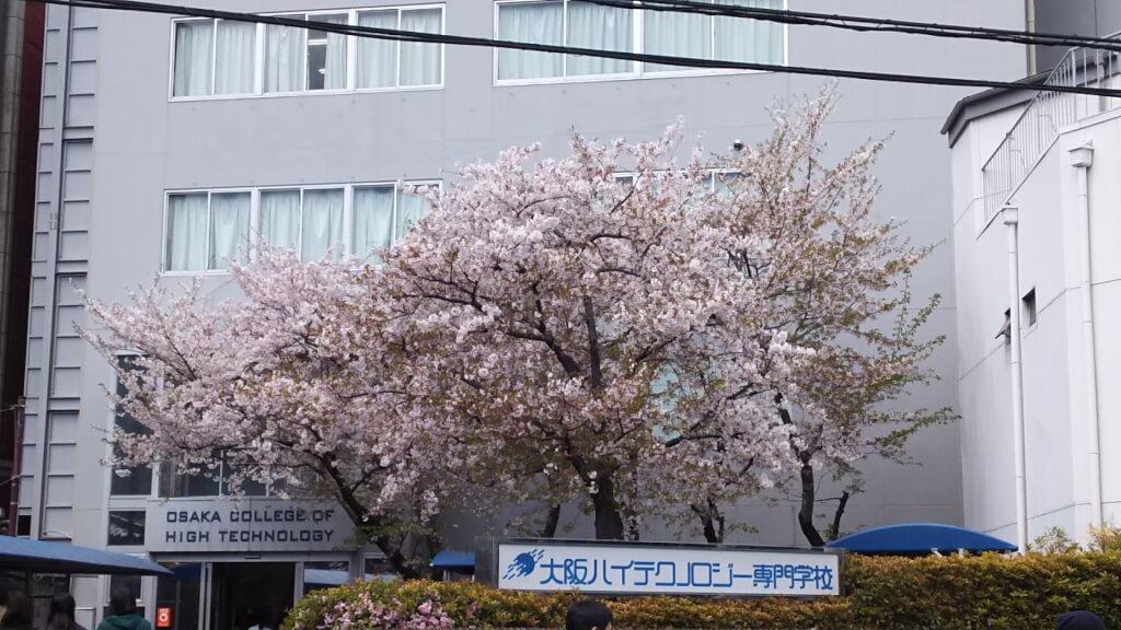 大阪ハイテクノロジー専門学校 桜の木