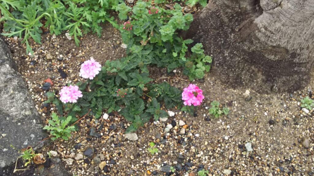 道端に咲いていた小さな花
