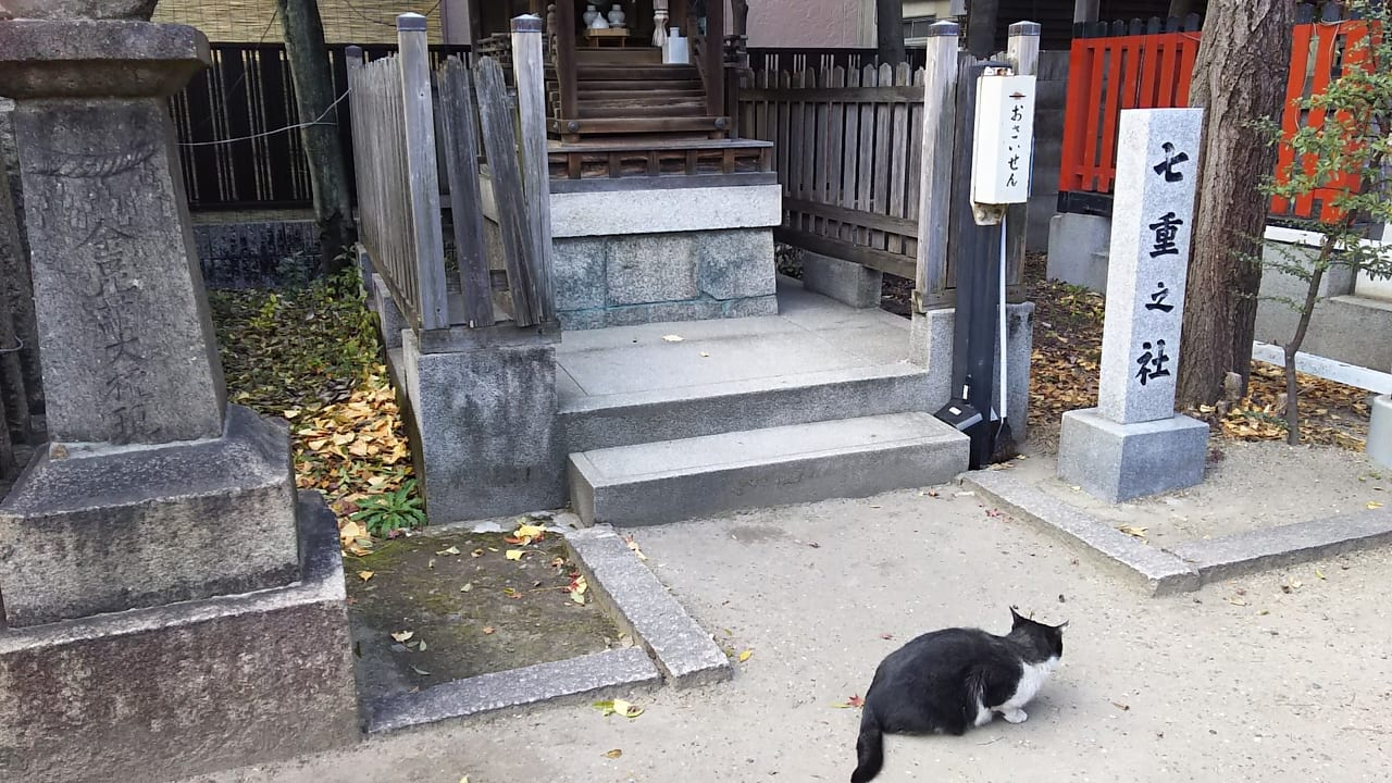 田蓑神社 七重之社と 猫