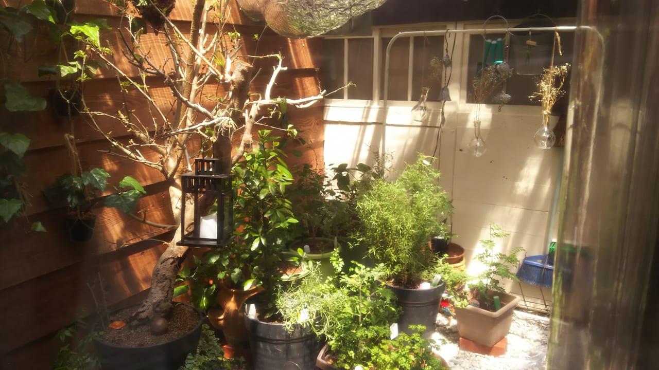 スペインバルTiburon ティブロン 店舗奥の中庭