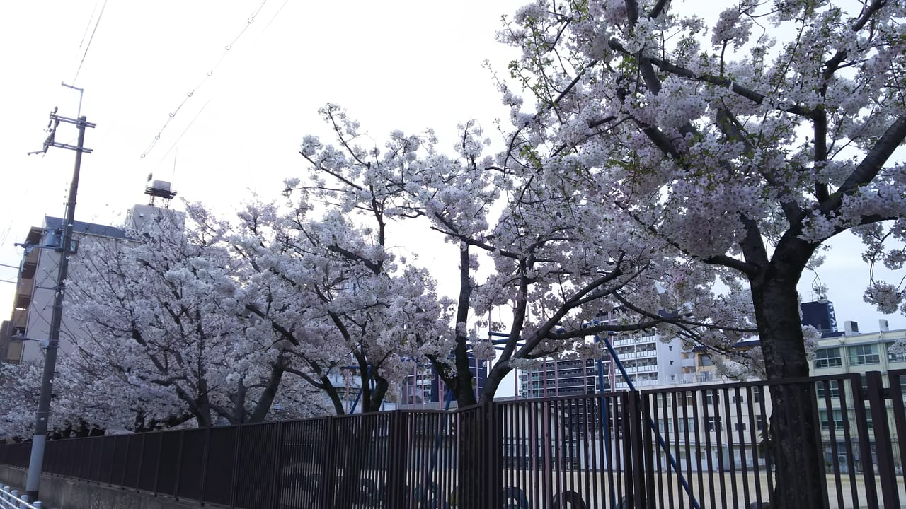 2021年3月27日 木川小学校 桜